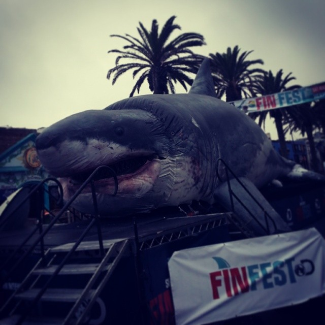 Shark week at hermosa beach. This thing is crazy huge